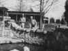 Taken at R.M. Taylor Zoo in Livingston Park, Jackson, Miss. On March 28, 1943.  The fellow in the back is Pfc. Ukichi Wozumi, one of the fellows I went with.  [Courtesy of Jan Nadamoto]