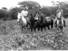 Horseback riding in Hawaii. [Courtesy of Janice Uchida Sakoda]
