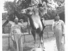 Yozo Yamamoto and a friend ride a Shriner's camel [Courtesy of Sandy Erlandson]